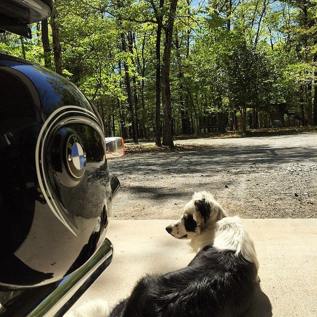 Quittin' time.  #vintageBMW #blackandwhite #gooddog